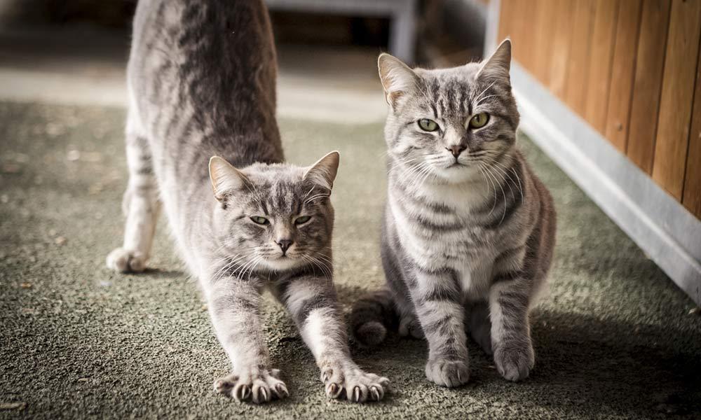 01-gatti-teramo-abruzzo.jpg