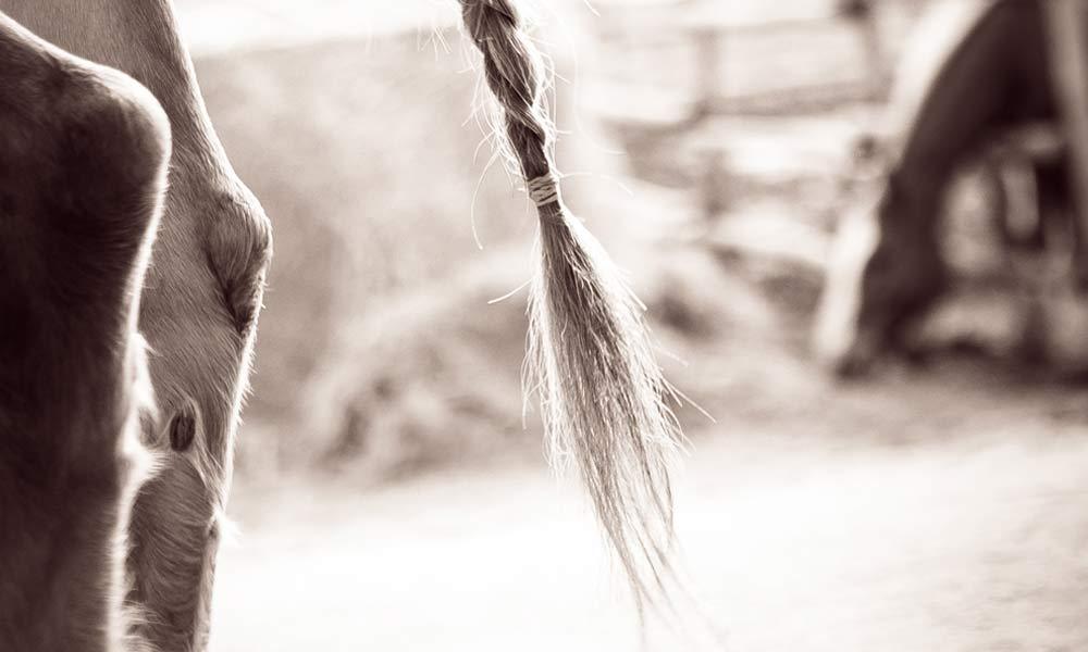 06-cavalli-teramo-abruzzo.jpg