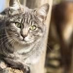 gatti-teramo-abruzzo