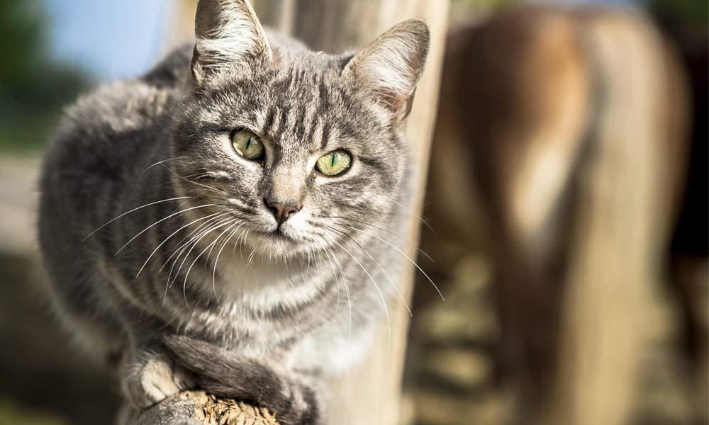 08-gatti-teramo-abruzzo.jpg