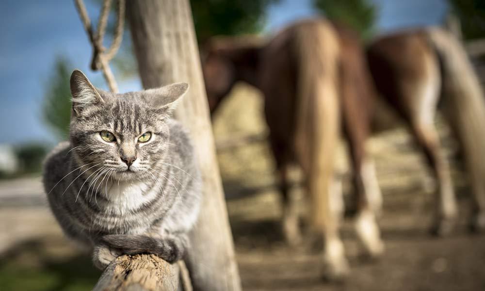 09-gatti-teramo-abruzzo.jpg