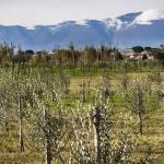 ulivi-teramo-abruzzo